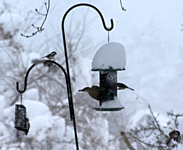 Lunch time at the bird feeder